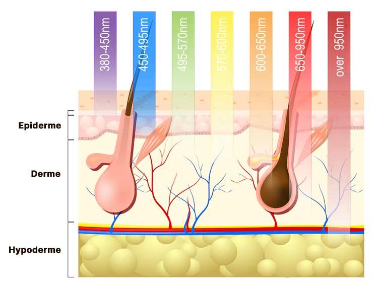 Penetration-des-lumieres-leds-rouge-bleu-et-proche-infrarouge-dans-la-peau-le-corps